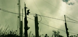 """Black Bird Electrical"", Guatemala (from Lifeslices, 2009)"