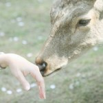 """Nara Deer"", Japan (from Lifeslices, 2009)"